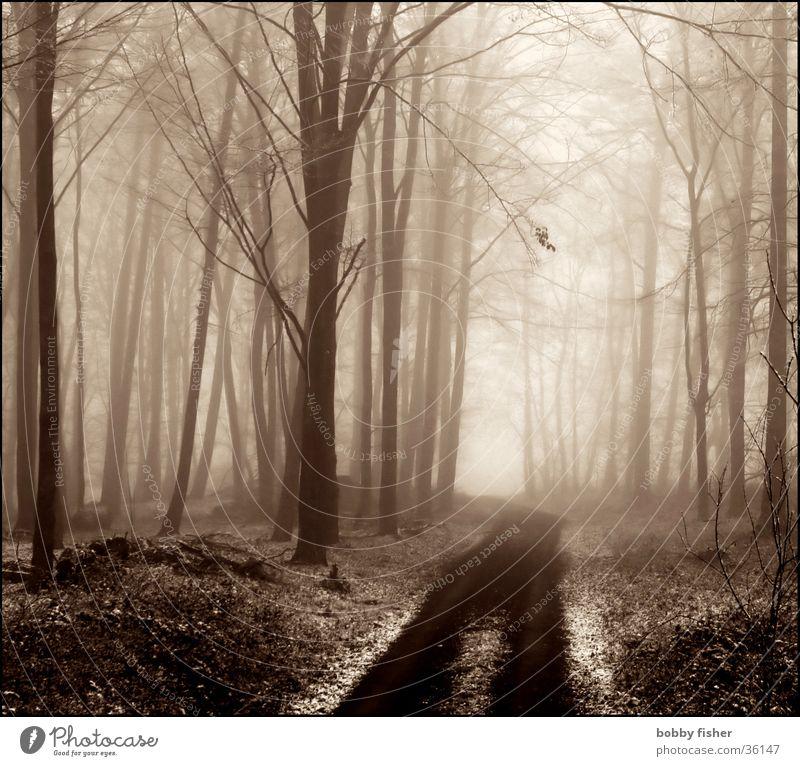 licht kommt Wald Nebel Baum kalt Winter Trauer Licht Traurigkeit Wege & Pfade