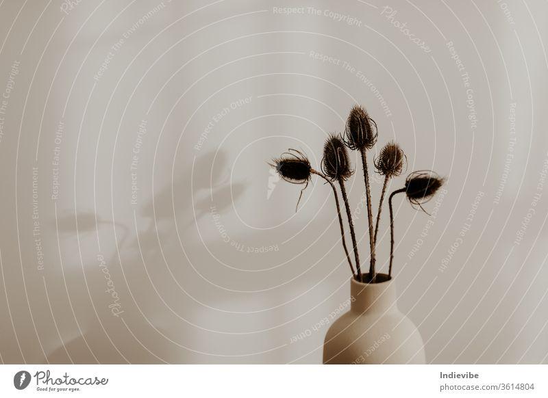 Strauß wilder Trockenblumen in beiger Vase in einem Raum mit weißer Wand Blume Dekoration & Verzierung Blumen Frühling Blumenstrauß Natur Pflanze vereinzelt