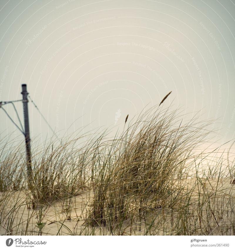 grüner strom Natur Pflanze Landschaft Meer Strand dunkel Umwelt Küste Gras Sand Energie Elektrizität Urelemente Ostsee Düne Stranddüne