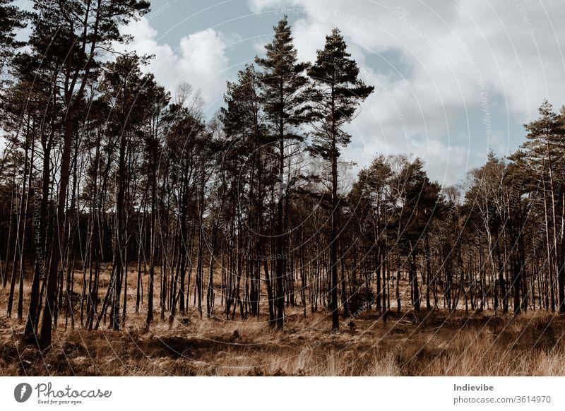 Herbsttag Kiefernwalddetail mit Wiese in einem Tal Wald Baum Natur Bäume Landschaft Himmel Holz grün Wälder fallen Winter Blätter Blatt Sonne Saison Park Gras