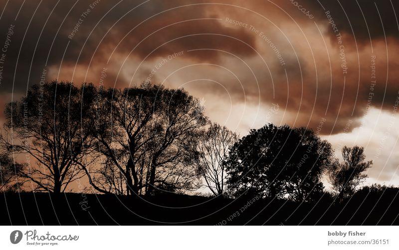 drama Baum Wolken dunkel Herbst Wetter bedrohlich Jahreszeiten