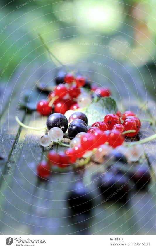 dreierlei Johannisbeeren Beeren reif Obst rote Johannisbeeren weiße Johannisbeeren schwarze Johannisbeeren anstrahlen lecker säuerlich sauer Sommer Früchte