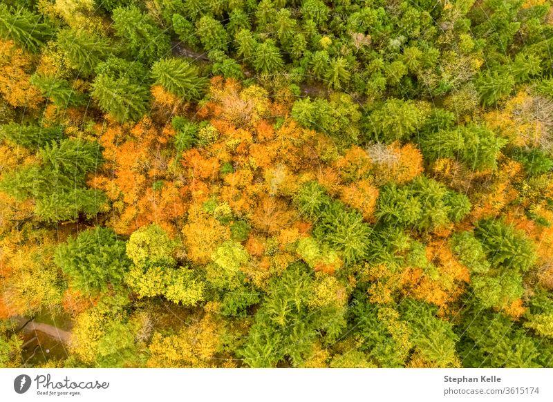 Vertikale Ansicht der Herbstwaldszene mit grün, rot und gelb gefärbten Bäumen. Wald Antenne fallen Dröhnen Kontrast Natur reisen malerisch schön natürlich