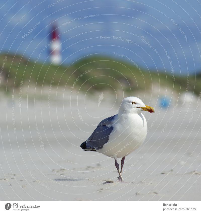 Möwe&Leuchtturm II Natur Landschaft Himmel Sommer Schönes Wetter Küste Strand Nordsee Meer Insel Sehenswürdigkeit Vogel 1 Tier Ferien & Urlaub & Reisen Düne
