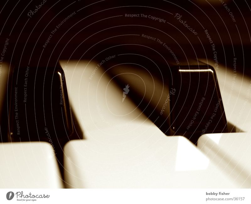 keys weiß schwarz Musik Freizeit & Hobby Flügel berühren Klavier Ton Tasteninstrumente