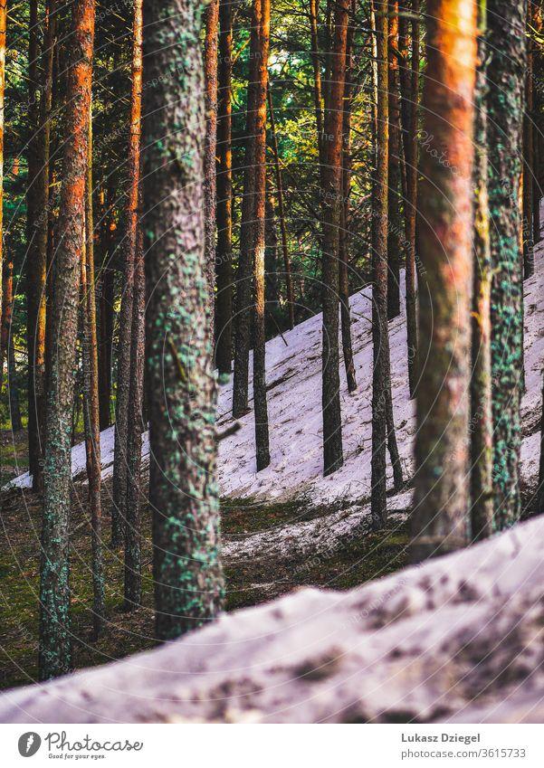 Bäume im Wald, die von der Küstendüne mit Sand bedeckt sind Baum Ästhetik unberührt natürliche Schönheit Sandstrände Sanddünen Küstenlandschaft