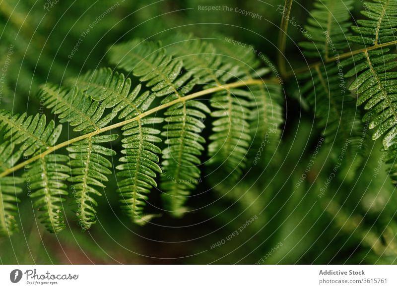 Verschiedene Pflanzen im Wald vegetieren idyllisch Flora friedlich Natur Spanien grün im Freien Asturien Botanik ruhig Ökologie natürlich Grün Windstille