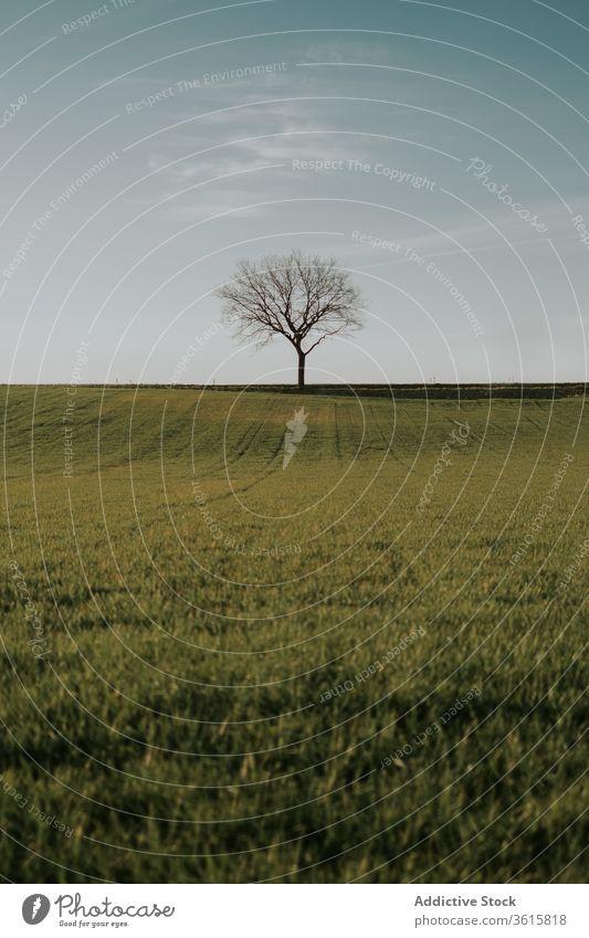 Grüne Wiese mit einsamem Baum im Sommer Feld trocknen Landschaft erstaunlich üppig (Wuchs) Natur Ackerbau ruhig friedlich Harmonie Windstille Gras Umwelt