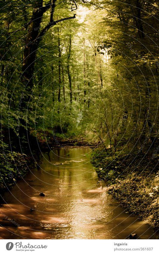 Heimatlich Umwelt Natur Landschaft Pflanze Erde Wasser Sonnenlicht Sommer Schönes Wetter Baum Sträucher Wald Bach Fluss glänzend leuchten träumen natürlich