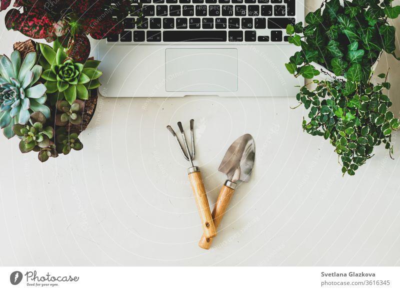 Fern-Online-Käufe von Gartenpflanzen und -geräten. Ein komfortabler, stilvoller Arbeitsplatz für Freiberufler mit Laptop und Sukkulenten von Zimmerpflanzen.