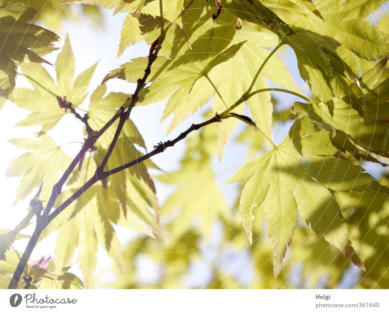 Blattwerk... Natur blau grün Sommer Pflanze Baum ruhig Umwelt Leben natürlich außergewöhnlich Stimmung braun Park Idylle