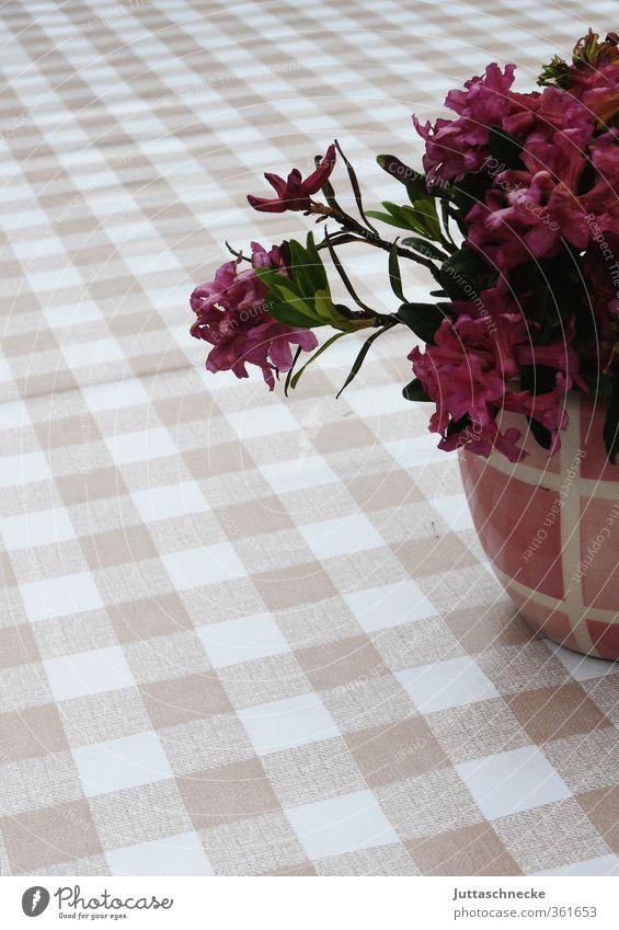 Blumis schön Sommer Pflanze Erholung ruhig Blatt Blüte rosa Zufriedenheit Tisch Blühend Frieden Duft kariert Tischwäsche Blumentopf