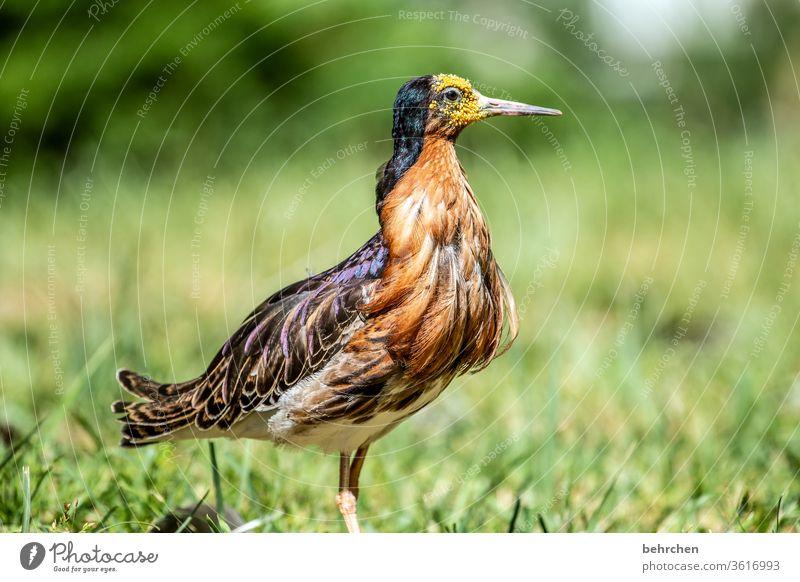 bin ich nicht prächtig?! Feder Kontrast Natur Tier Wildtier Vogel Flügel Tiergesicht Schnabel außergewöhnlich elegant exotisch fantastisch schön Farbfoto