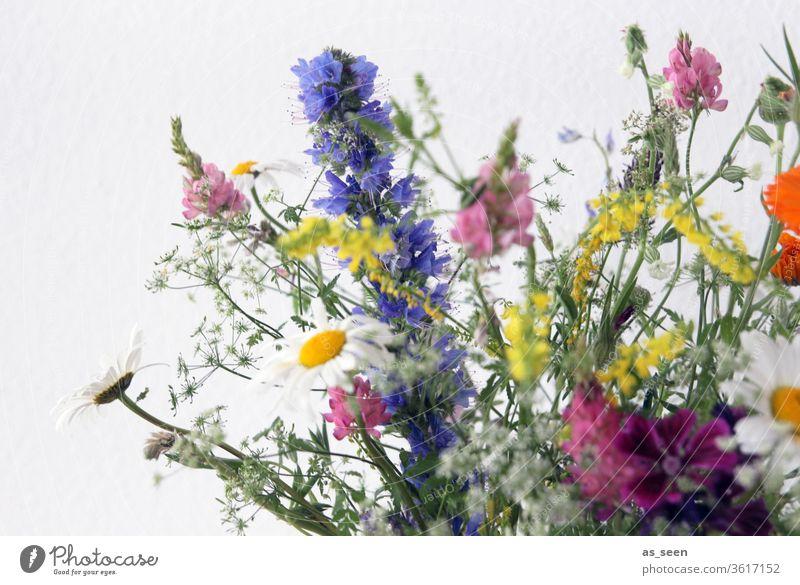 Feldblumenstrauß Blüten Blumen bunt Wiese Lupinen Margerten Blumenstrauß gelb weiß rosa pink grün violett lila wild natürlich Natur schön Frühling Pflanze