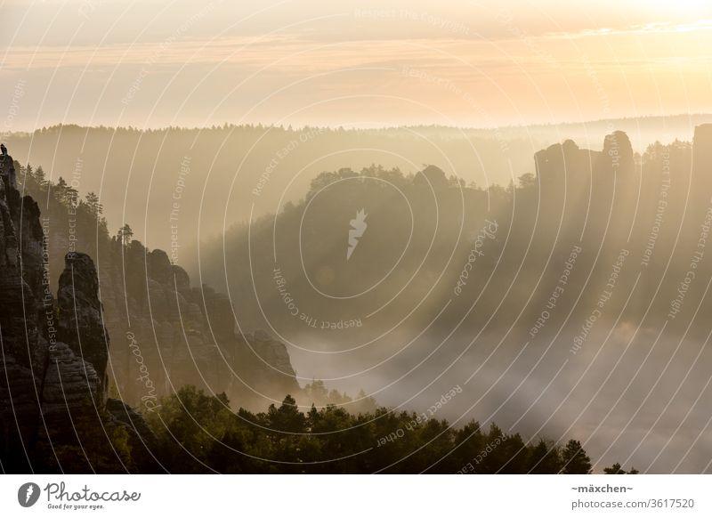 Sonnenstrahlen Sonnenaufgang Licht Schatten Silhouette Elbsandsteingebirge Sächsische Schweiz Gebirge Berge Lichtspiel Wald Nebel Morgennebel Morgendämmerung