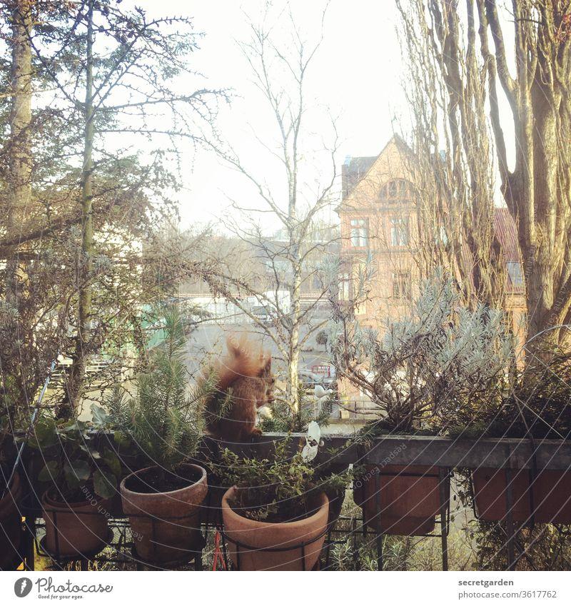 Balanceakt Eichhörnchen Balkon Herbst knuffig Tier Natur niedlich Baum braun beobachten Fell Nagetiere Wildtier Farbfoto Außenaufnahme klein Menschenleer Tag