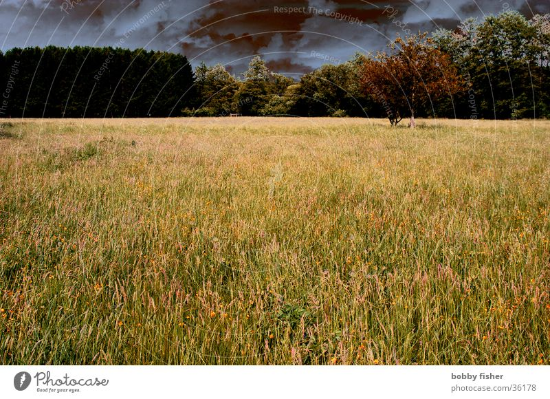sturm zieht auf Blume Wolken dunkel Wiese Gras Frühling Wetter gefährlich bedrohlich Sturm Gewitter
