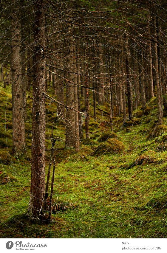 Märchenwald Natur Frühling Pflanze Baum Gras Moos Fichte Nadelbaum Baumstamm Waldlichtung grün ruhig Farbfoto mehrfarbig Außenaufnahme Menschenleer Tag Schatten