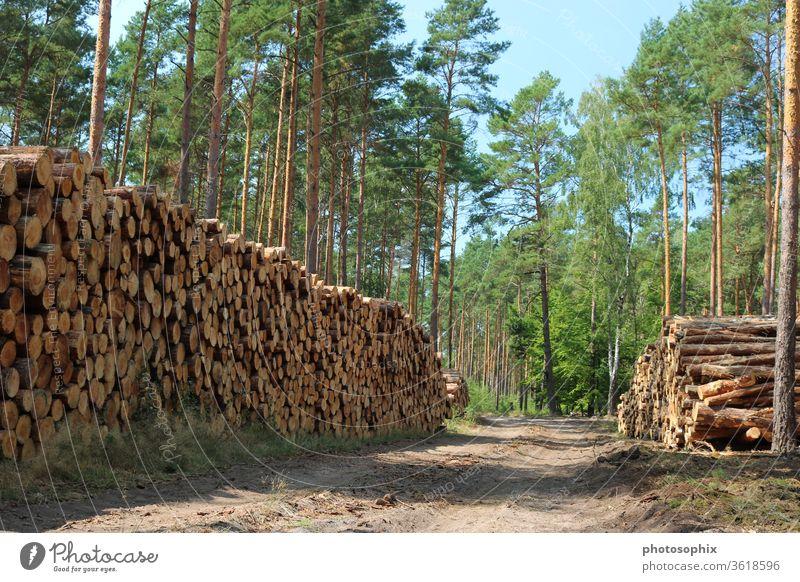 Holzstoß im Wald Holzstapel Baumstapel Stammholz Holzlagerung Stammholzlagerung Trockenlagerung Forstwirtschaft Waldwirtschaft Nutzholz Forstweg Waldweg