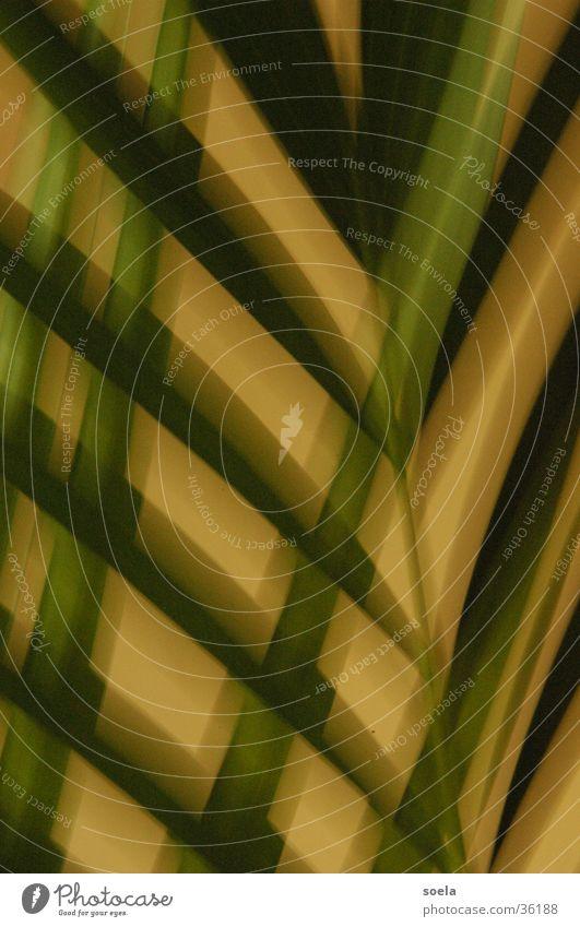 Blatt Natur Gitter