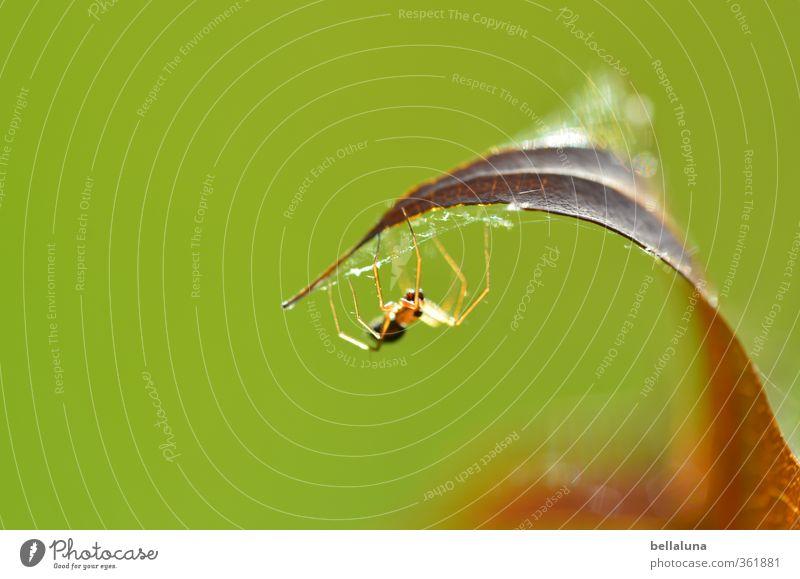 Ick gloob, ick spinne... | das sollte reichen. Natur Pflanze Sommer Tier Blatt Wald Umwelt Wiese Tierjunges Herbst Gras Garten Park Feld sitzen Wildtier