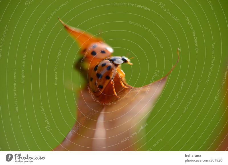 Bring allen Glück, die es am nötigsten brauchen! Natur Pflanze Tier Herbst Schönes Wetter Gras Blatt Garten Park Wiese Wald Wildtier Käfer Tiergesicht Flügel 1