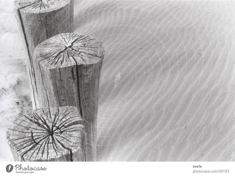 Ameland Holz Sand Spuren Nordsee