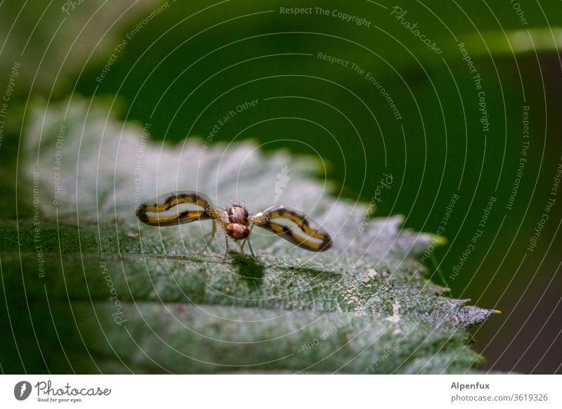 Unbekanntes Flug Objekt Tier Insekt Fliege Nahaufnahme Flügel Makroaufnahme fliegen Farbfoto Natur Außenaufnahme Facettenauge Blick Detailaufnahme Menschenleer