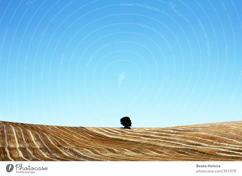 Einzelgänger Sommerurlaub Landwirtschaft Forstwirtschaft Natur Landschaft Pflanze Wolkenloser Himmel Sonne Schönes Wetter Baum Nutzpflanze Getreidefeld Feld