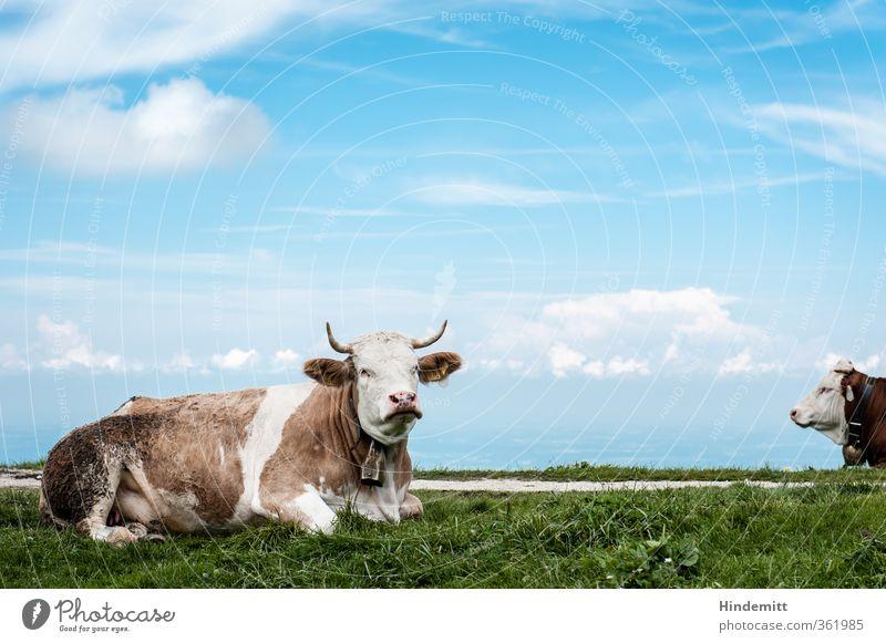 AST6 Inntal | Langweilst du dich auch so wie mich? Himmel blau grün weiß Sommer Pflanze Tier Wolken Berge u. Gebirge Gras Wege & Pfade braun liegen Wetter