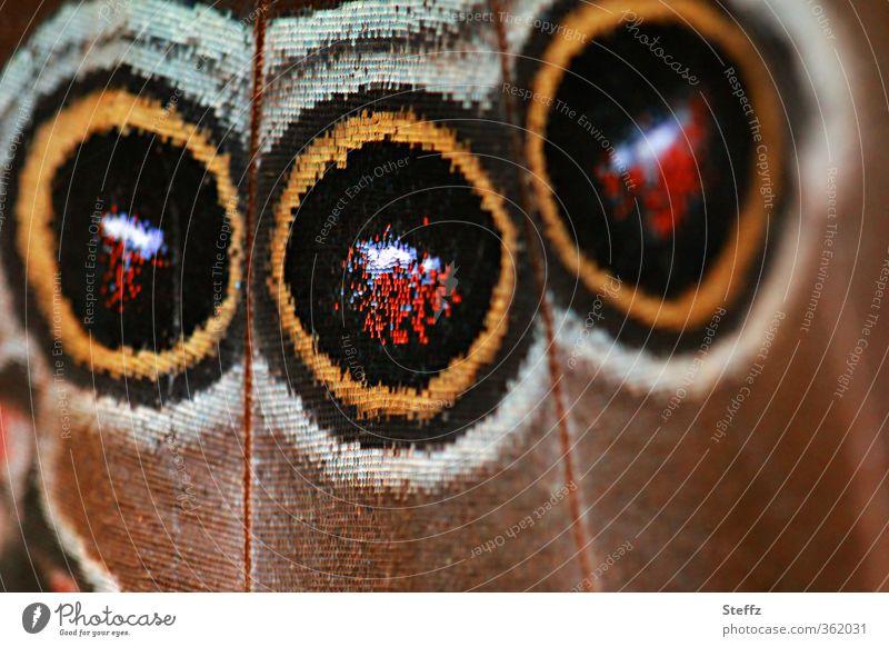 300 bunte Augenblicke Natur Sommer Schmetterling Flügel Augenflecken Morphofalter Edelfalter Augenfalter Himmelsfalter nah natürlich rund schön braun Design