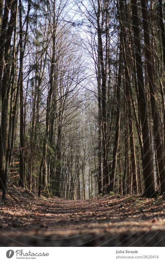 leerer Waldweg im Herbst Waldboden Baum Baumstamm Baumkrone laublos Wege & Pfade nirgendwo Lichtspiel Lichteinfall hell Tunneleffekt trauerkarte