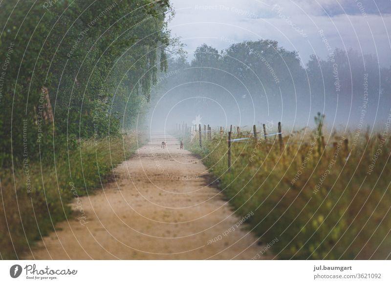 Zwei Hasen auf ihrem Weg Hase & Kaninchen Wege & Pfade Morgenstimmung Nebel Baum Wiese Felder