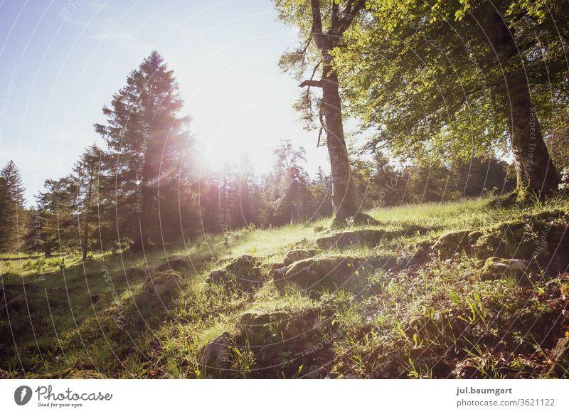 Sonnenspiel Wald Waldboden Wiese Natur Tag Farbfoto Gras Licht mother earth
