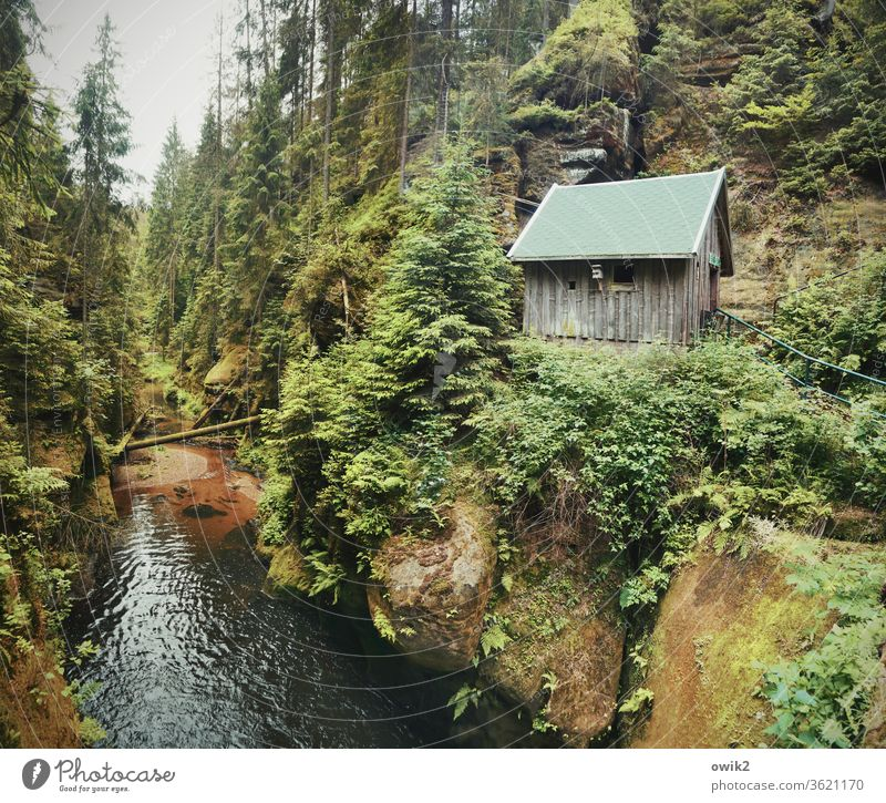 Kirnitzschtal Elbsandsteingebirge Sachsen Ostdeutschland Wald Bach Flusslauf Hütte Schlucht Natur Landschaft Berge u. Gebirge Felsen Außenaufnahme wandern