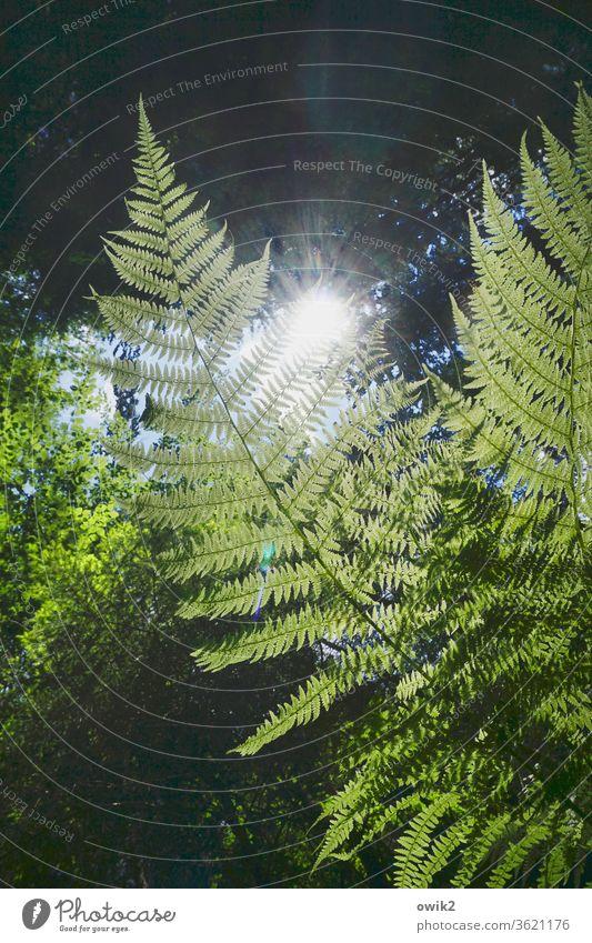 Waldbild Umwelt Natur Landschaft Pflanze Schönes Wetter Sträucher Idylle ruhig grün Wachstum Echte Farne friedlich Waldlichtung Strukturen & Formen