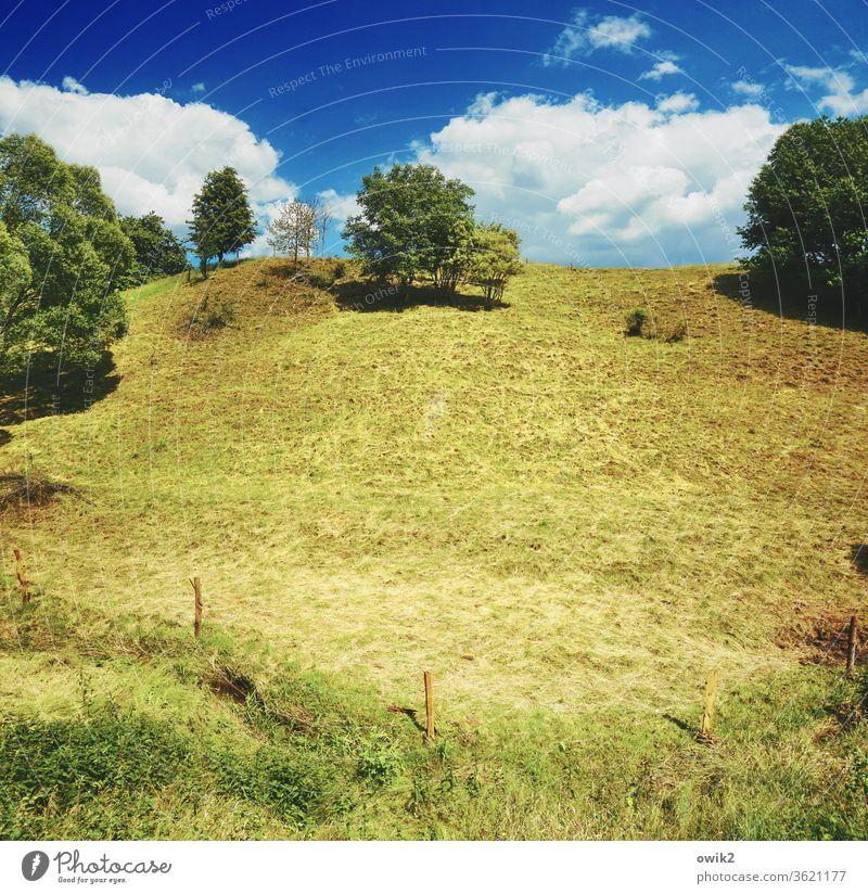Abhängig Umwelt Natur Landschaft Horizont Baum Gras Wiese Deutschland Berghang Hügel Farbfoto Außenaufnahme Menschenleer Textfreiraum links Textfreiraum oben
