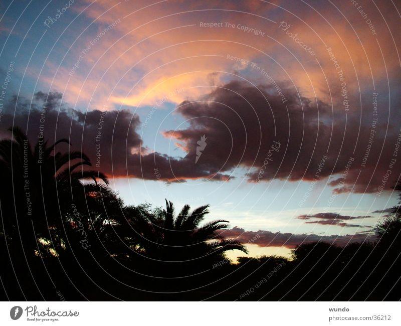 Januarwetter in Namibia Wolken Sonnenuntergang Afrika Palme Naturphänomene Gewitter Himmel