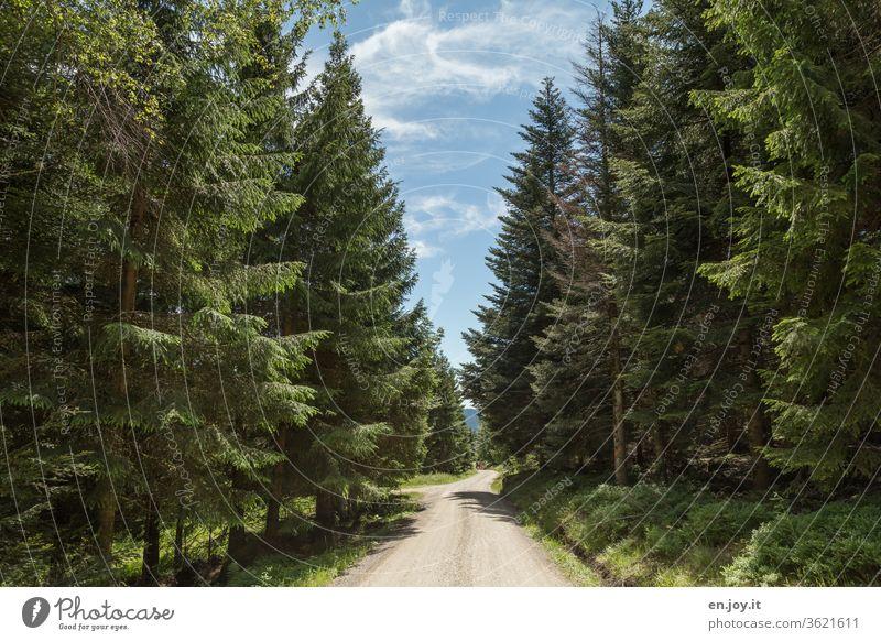 Waldweg zwischen hohen Tannen bei schönem Wetter Weg Straße Fahrweg Wanderweg Nadelwald Nadelbäume Fichten blauer Himmel wandern Wanderer schönes Wetter Urlaub