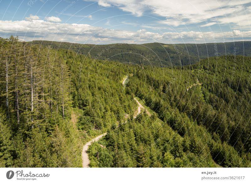 Aussicht auf den Schwarzwald und einen Wanderweg Deutschland Baden-Württemberg Wald Berge u. Gebirge Nationalpark Horizont Nadelwald Tannen Ausflug Urlaub
