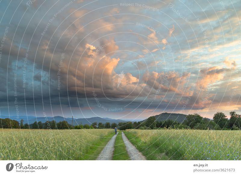 Mann läuft auf einem Feldweg zwischen Kornfeldern unter weitem Abendhimmel mit schönen Wolken, die vom Sonnenuntergang angestrahlt werden Himmel Felder Weg
