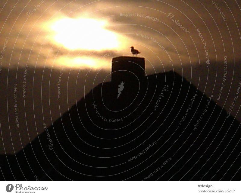Einsame Romantik Abendsonne Vogel Haus Einsamkeit Dach mystisch Trauer träumen Denken Sylt schön Sonne Traurigkeit Insel Fantasygeschichte Ente