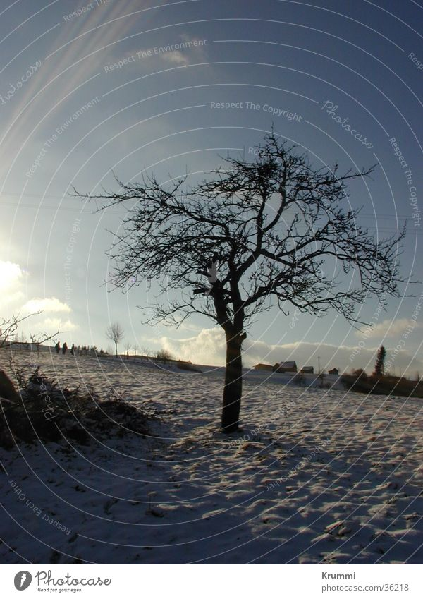 Winterruhe Himmel Baum Sonne blau Schnee Feld