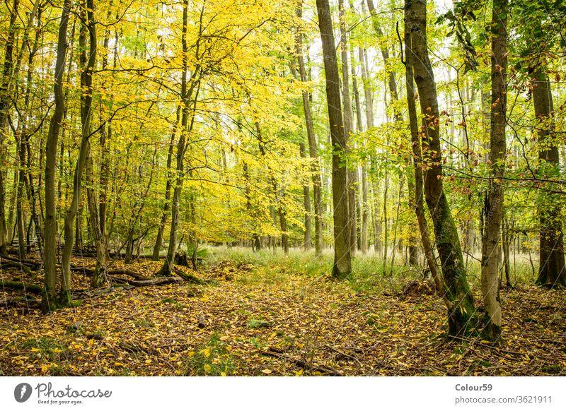 Wald Holz Park grün im Freien Laubwerk Umwelt Landschaft sonnig Sonnenlicht Licht Natur Baum Hintergrund panoramisch Saison bezaubernd Panorama Sommer Frühling
