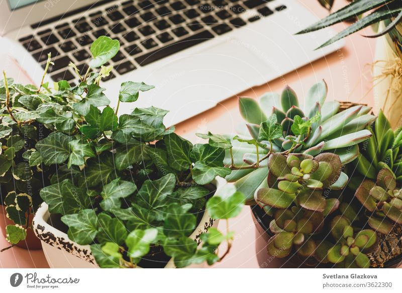 Fern-Online-Käufe von Gartenpflanzen und -geräten. Ein komfortabler, stilvoller Arbeitsplatz für Freiberufler mit Laptop und Zimmerpflanzen Sukkulenten