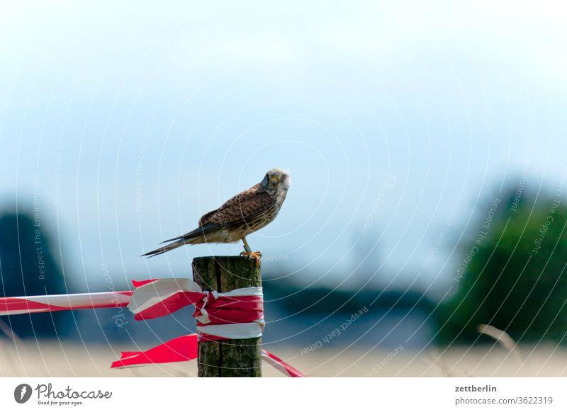 Falke berlin falke ferne flugbahn flughafen flugplatz freiheit frühling himmel horizont menschenleer raubvogel rollbahn skyline sommer spiegelbild tempelhof