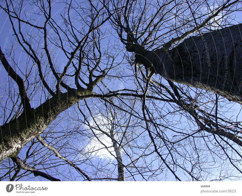 giant trees Baum Wolken Wald Fototechnik blau Himmel