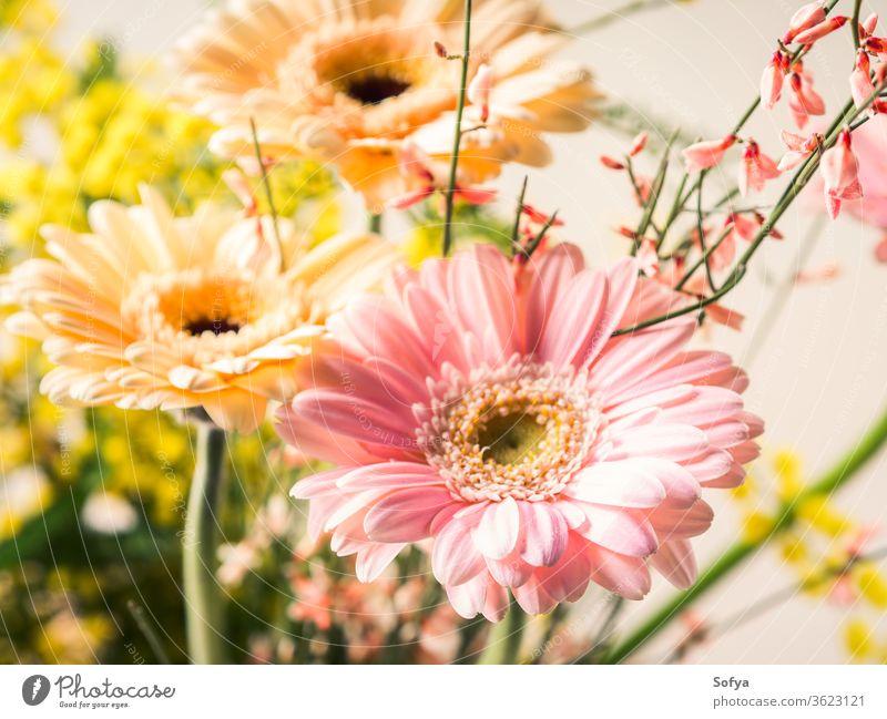 Strauß schöner Blumen Gerbera Nahaufnahme Frau Tag Postkarte Gruß Pastell flach legen Frühling Feiertag festlich Hintergrund Einladung rosa Mutter Hochzeit