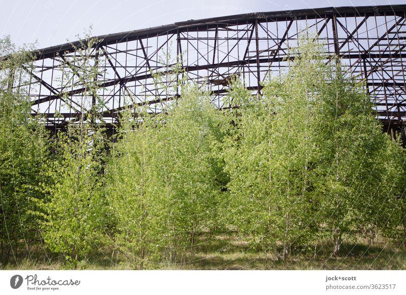 rostiger verfallener Hangar mit viel frischem Grün davor lost places Natur Laubbaum kaputt Vergänglichkeit alt Verfall Architektur Ruine Zahn der Zeit