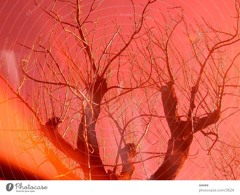 red nacked tree Baum Laubbaum laublos Blatt rot Fototechnik orange